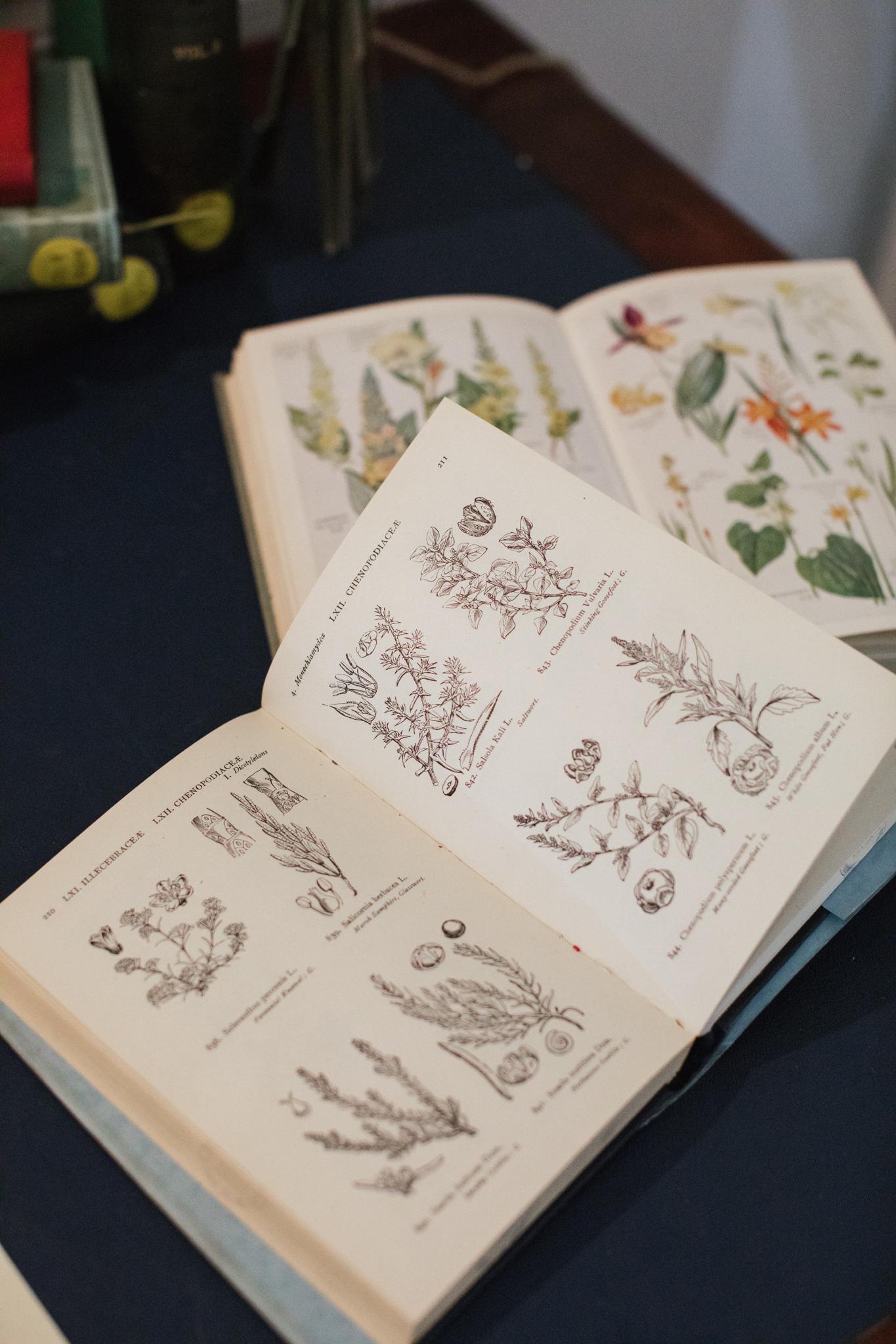 Herbarium_Joanne-Crawford-6692.JPG