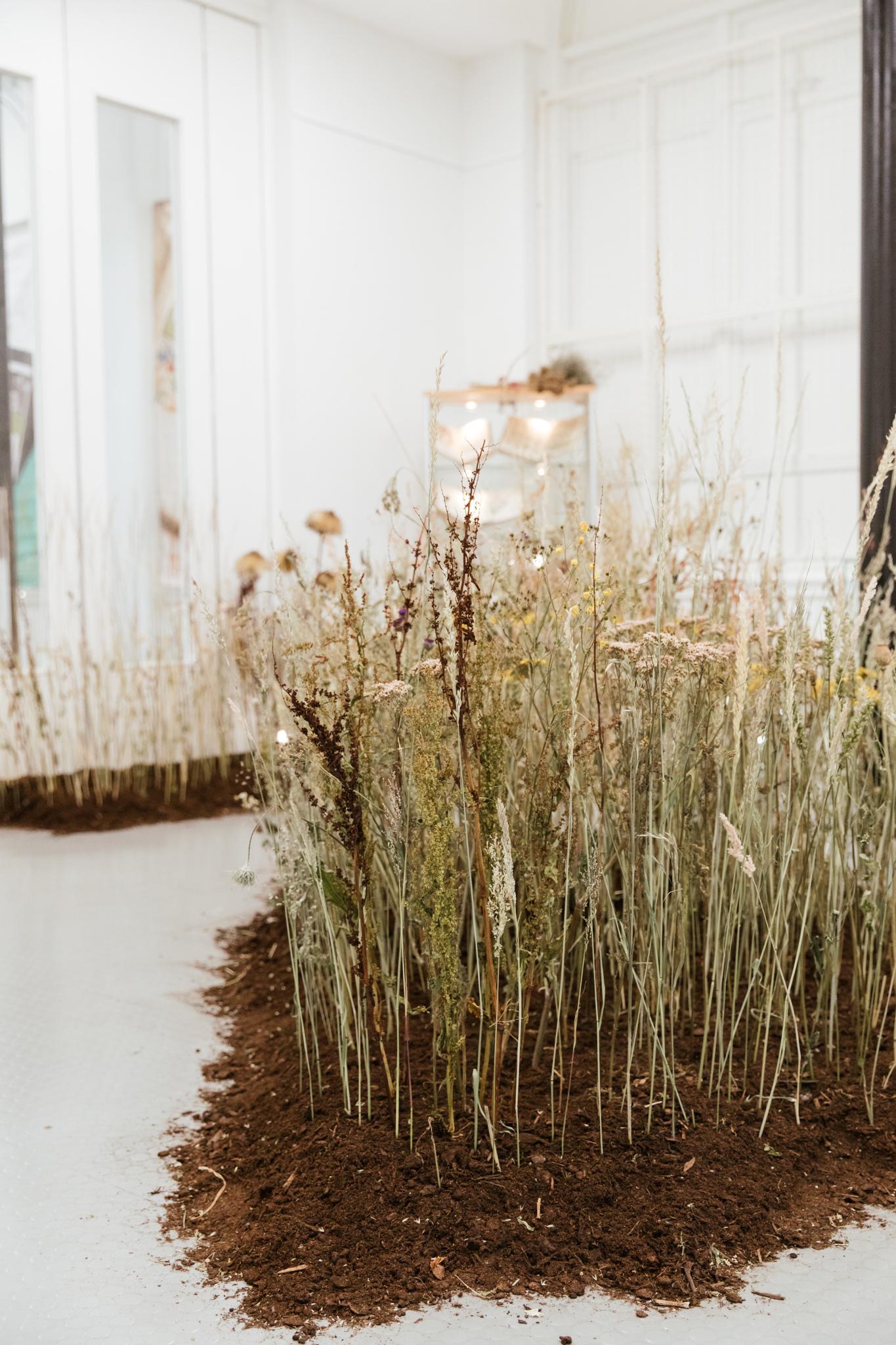 Herbarium_Joanne-Crawford-6739.JPG