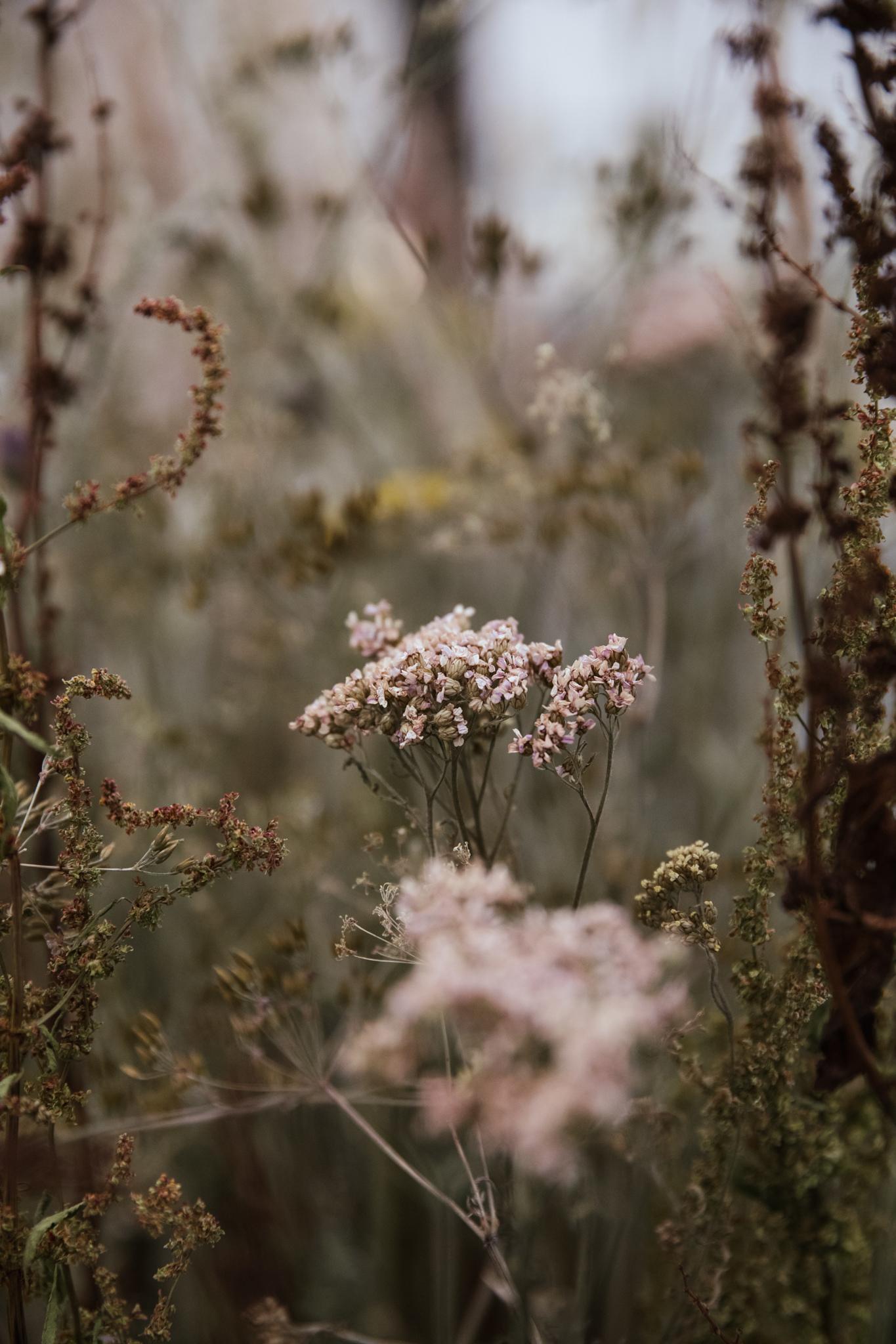 Herbarium_Joanne-Crawford-6761.JPG