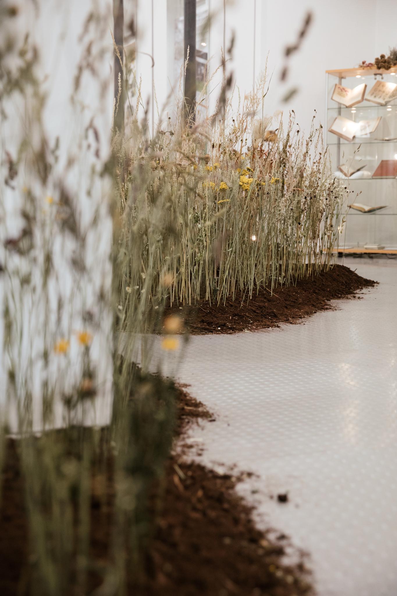 Herbarium_Joanne-Crawford-6774.JPG