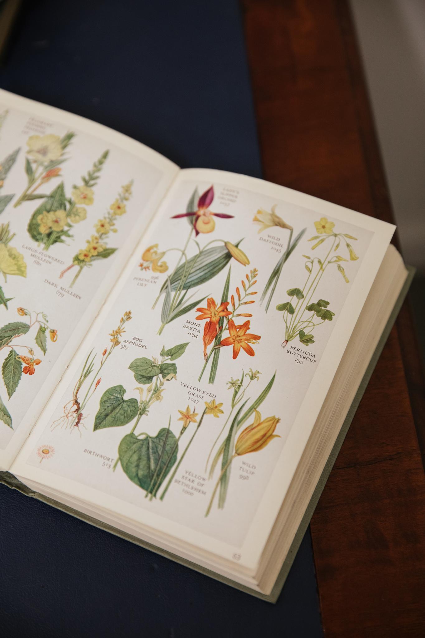 Herbarium_Joanne-Crawford-6820.JPG