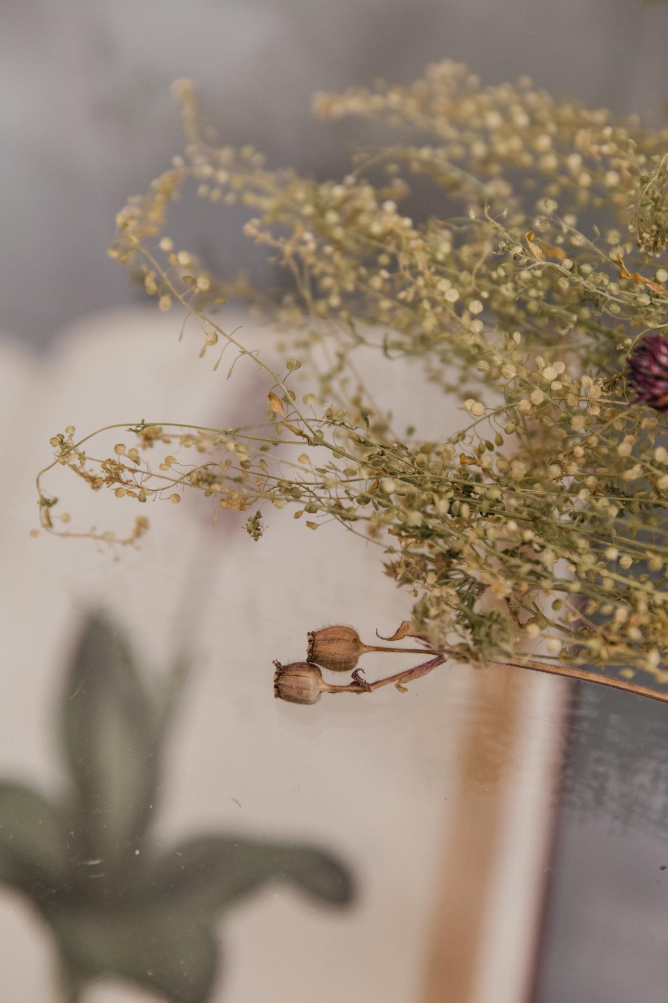 Herbarium_Joanne-Crawford-6890.JPG