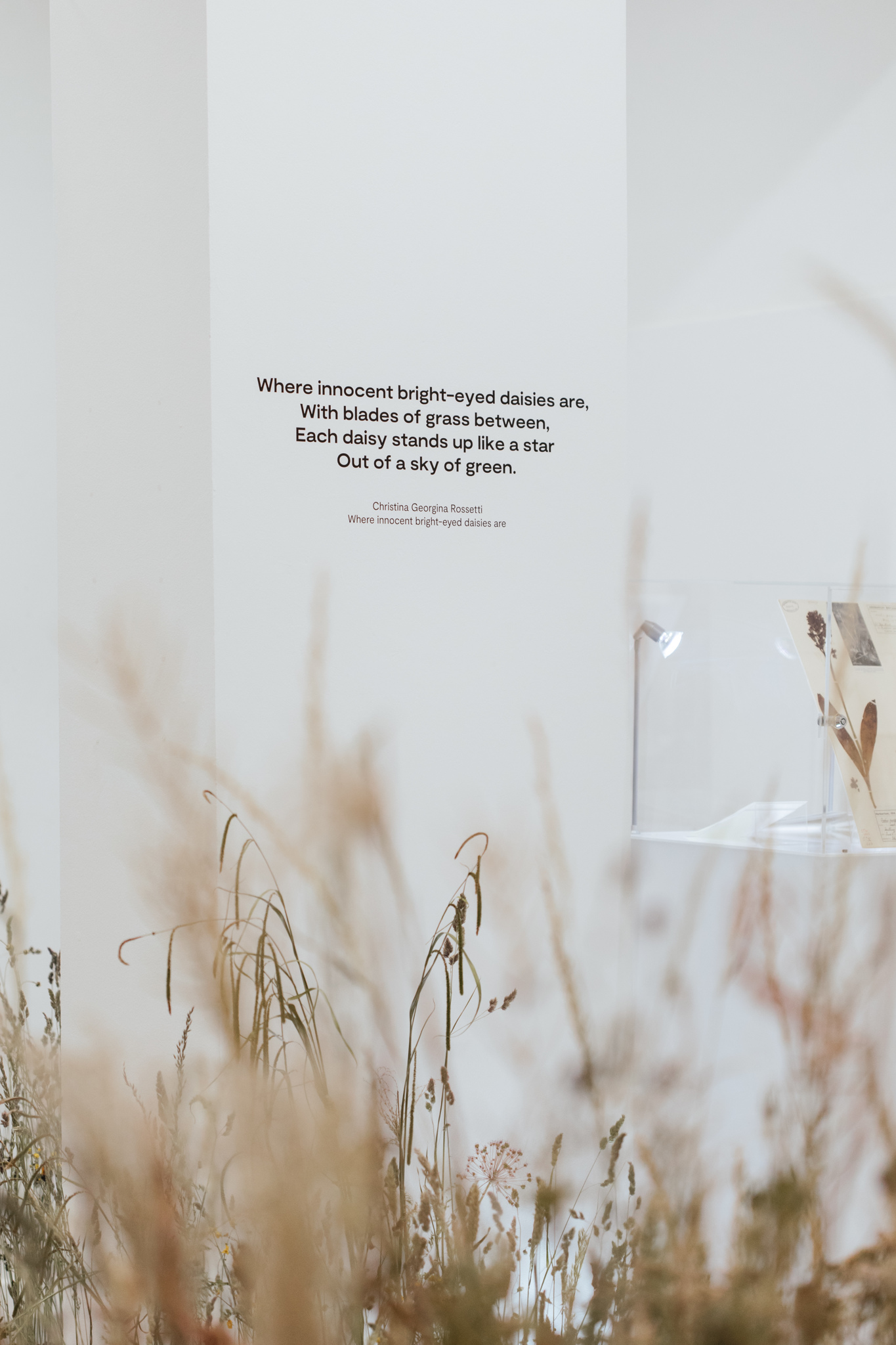 Herbarium_Joanne-Crawford-6946.JPG
