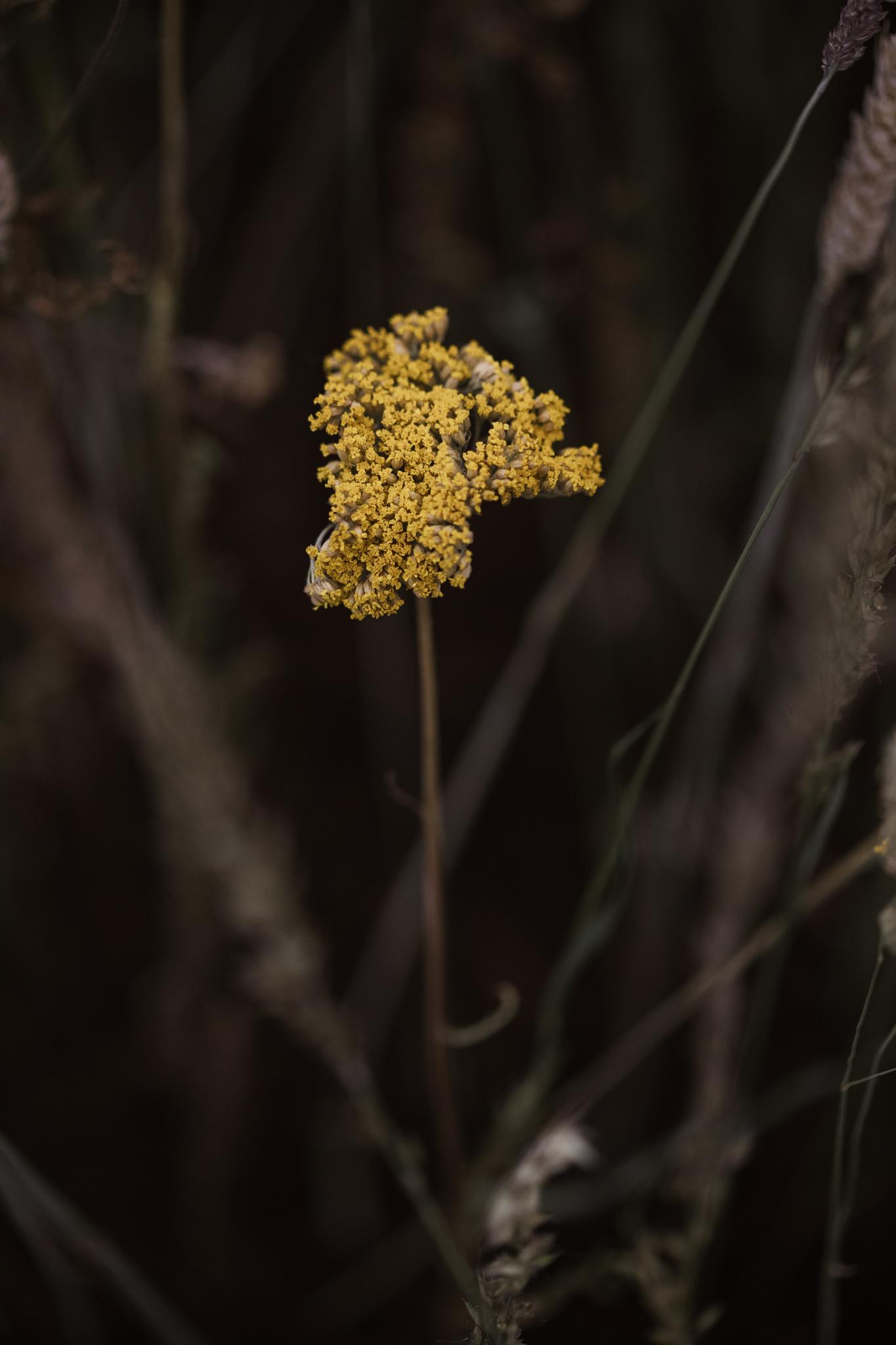 Herbarium_Joanne-Crawford-6959.JPG