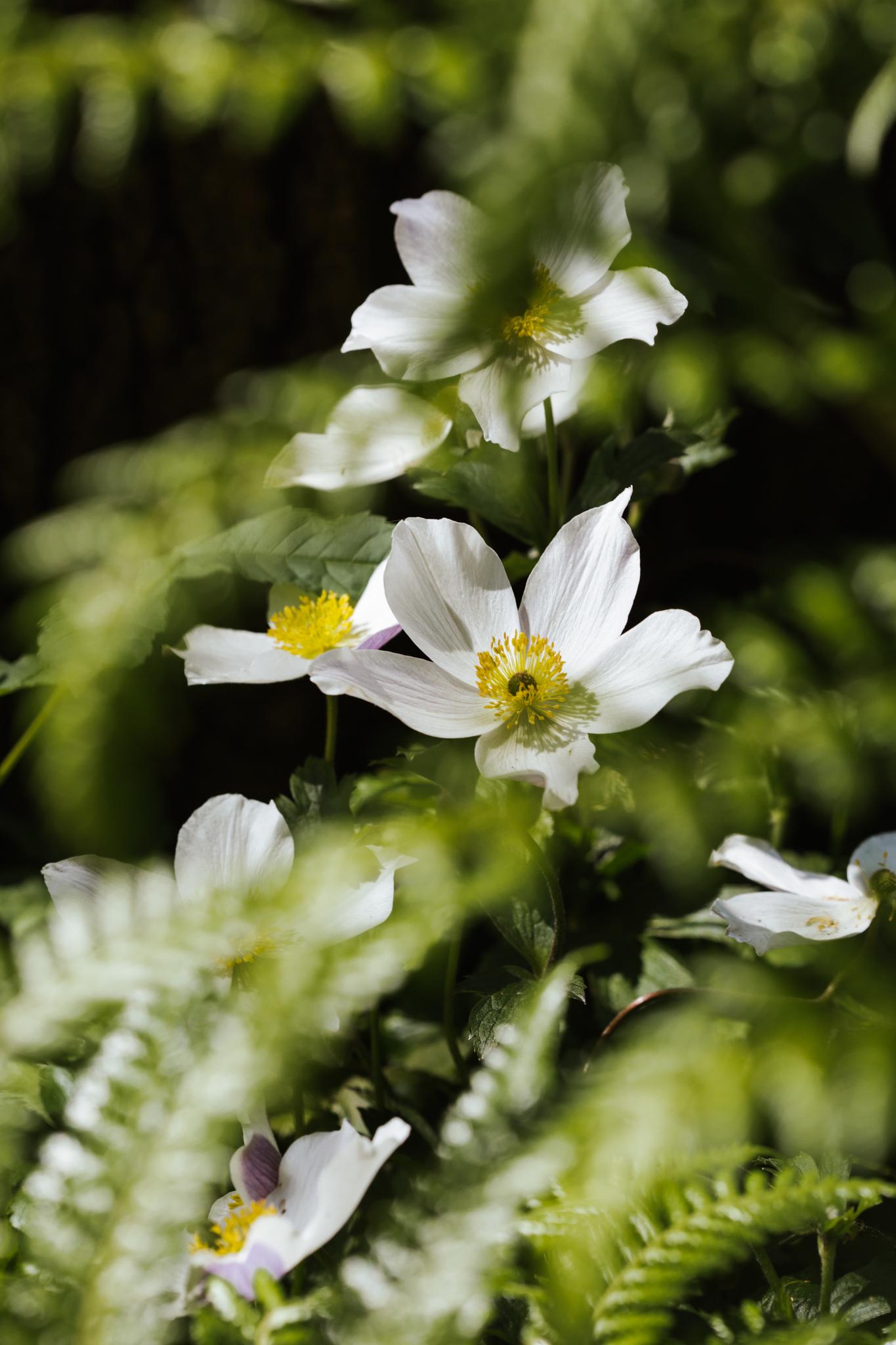 LAND-Chelsea-flower-show_Joanne-Crawford-8184.JPG