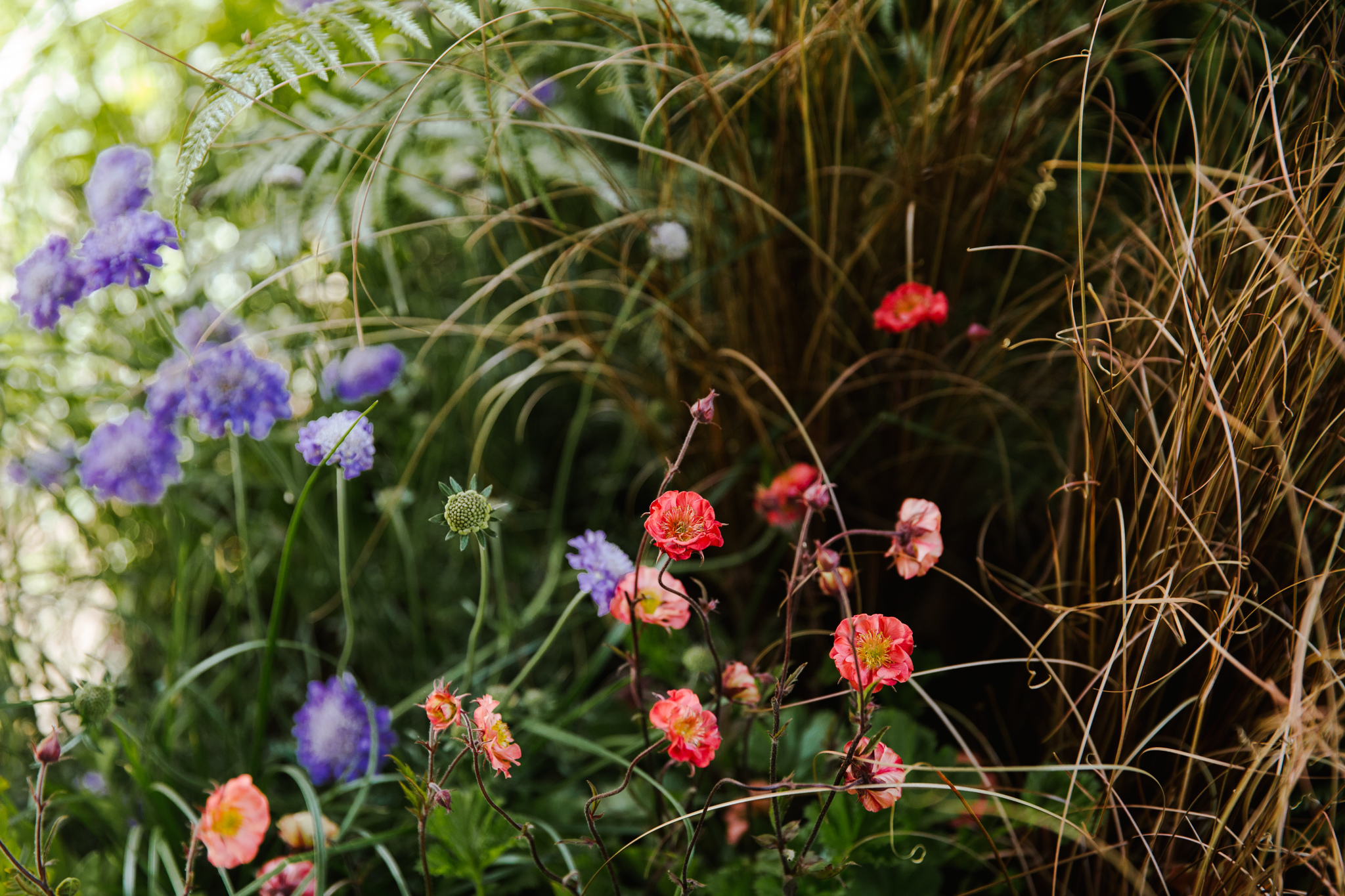 LAND-Chelsea-flower-show_Joanne-Crawford-8040.JPG