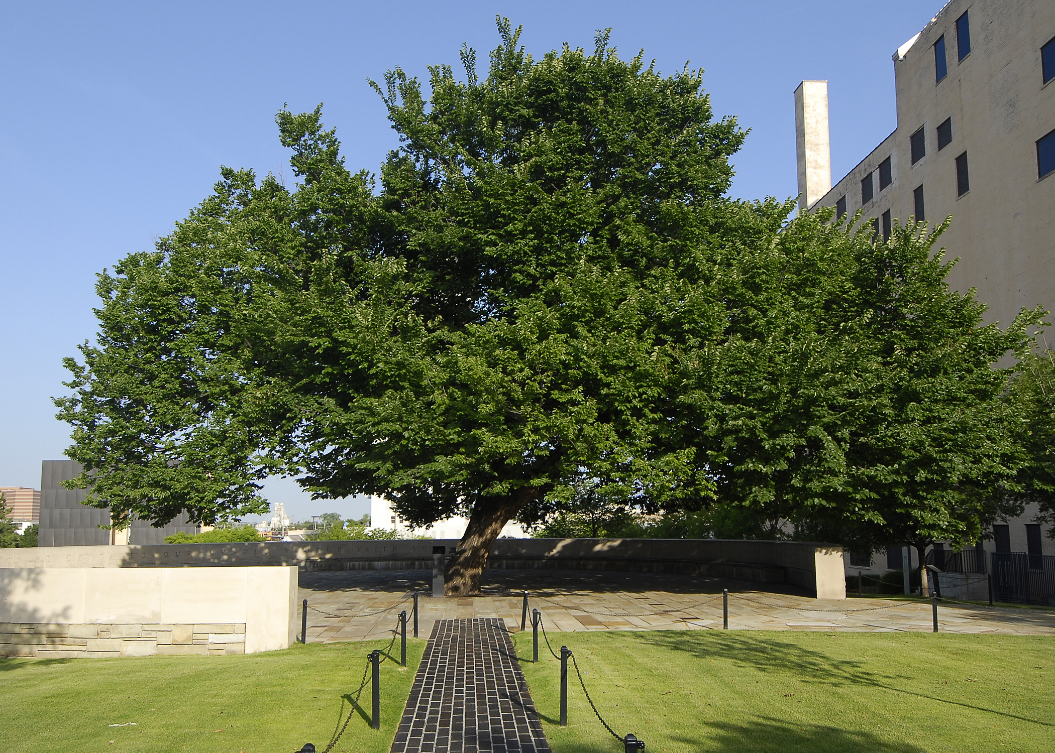 Survivor Tree, Oklahoma City.  Photo courtesy of: oklahomacitynationalmemorial.org