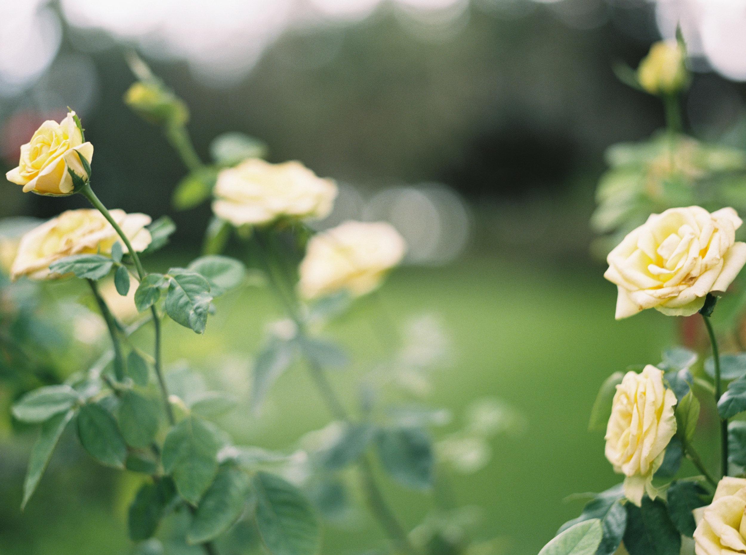 cypress grove estate house orlando florida wedding photos rose garden
