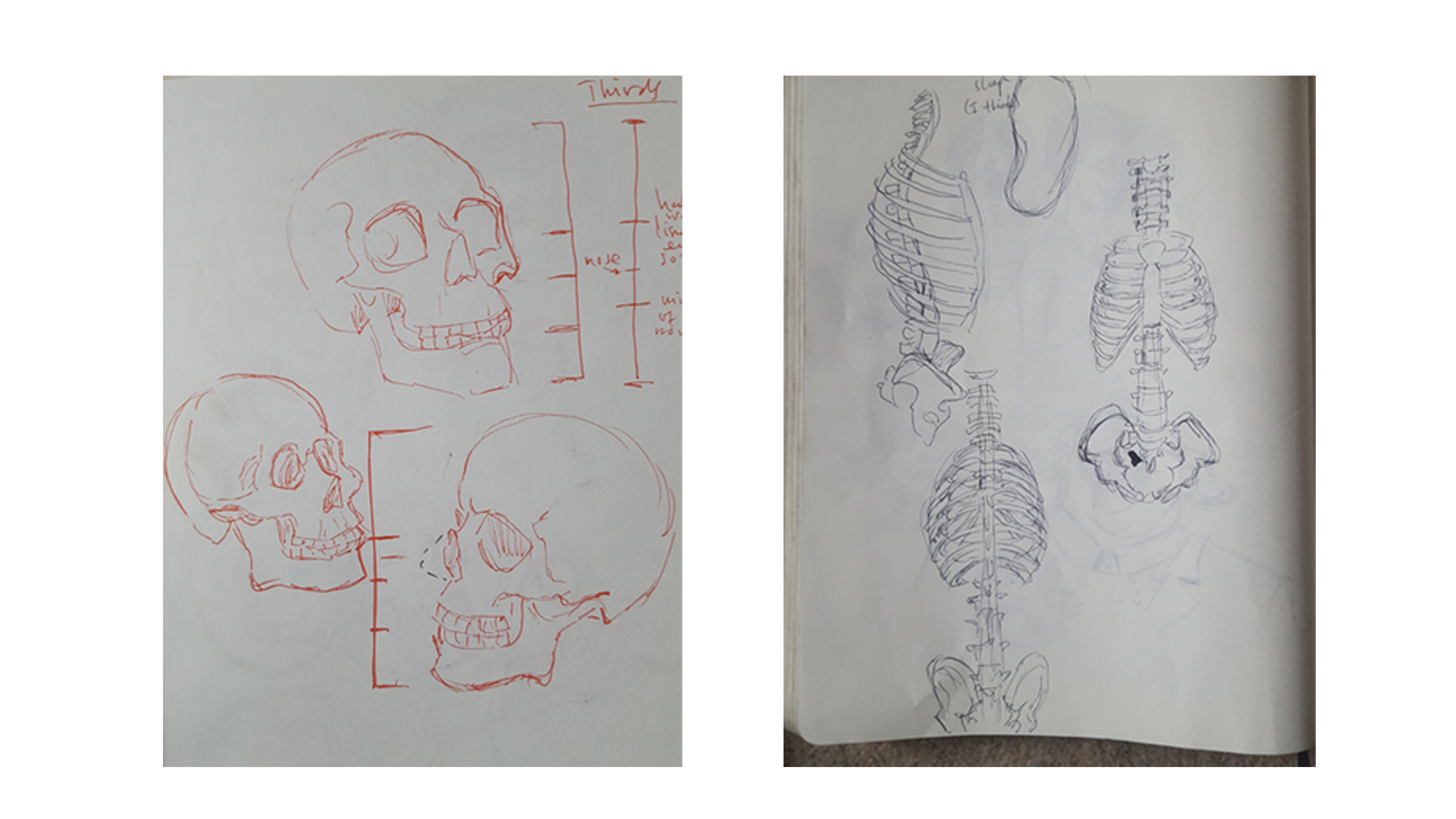 anatomy studies 1 May 2018.jpg