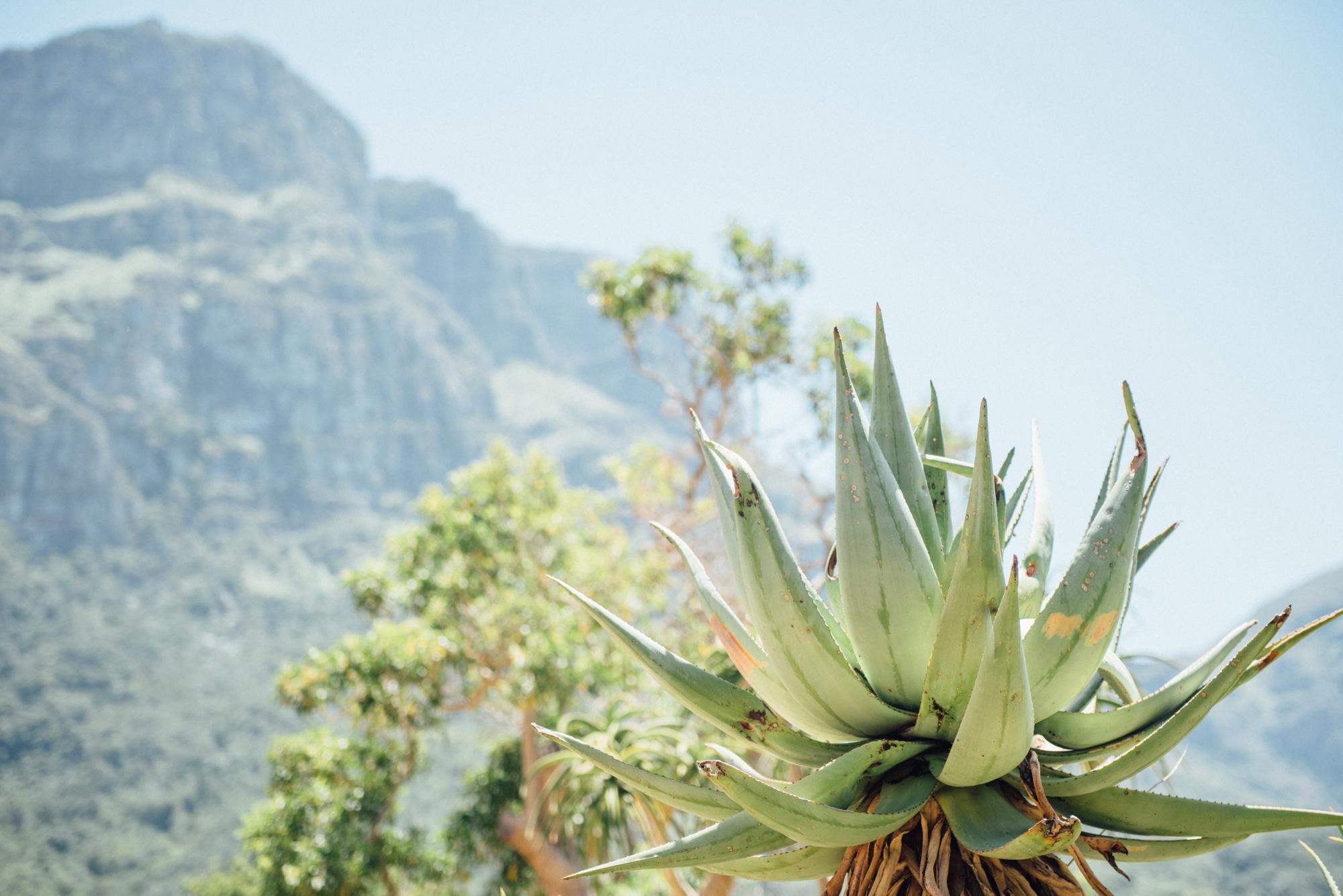 Capetown -52.jpg