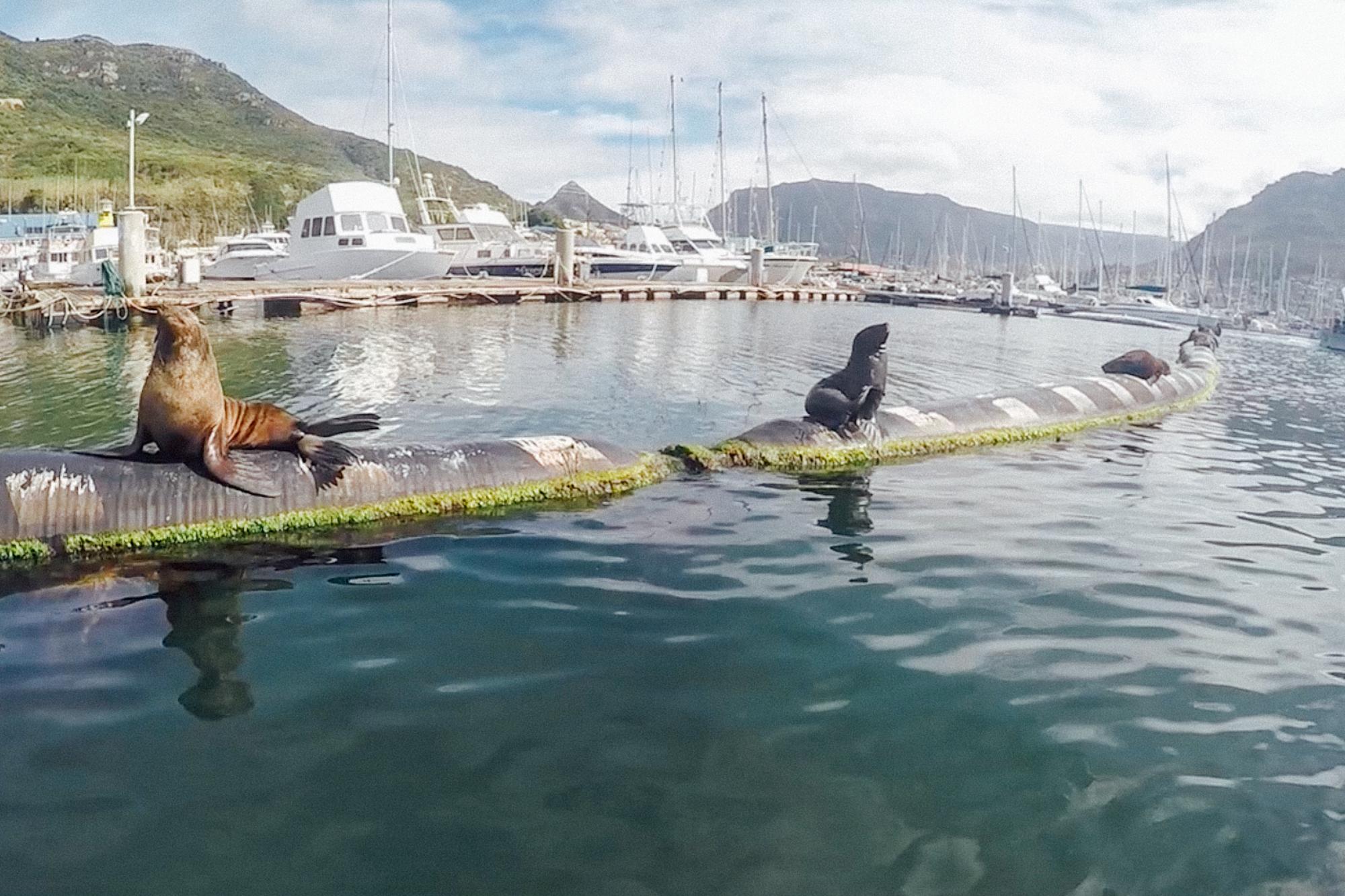 Capetown -57.jpg