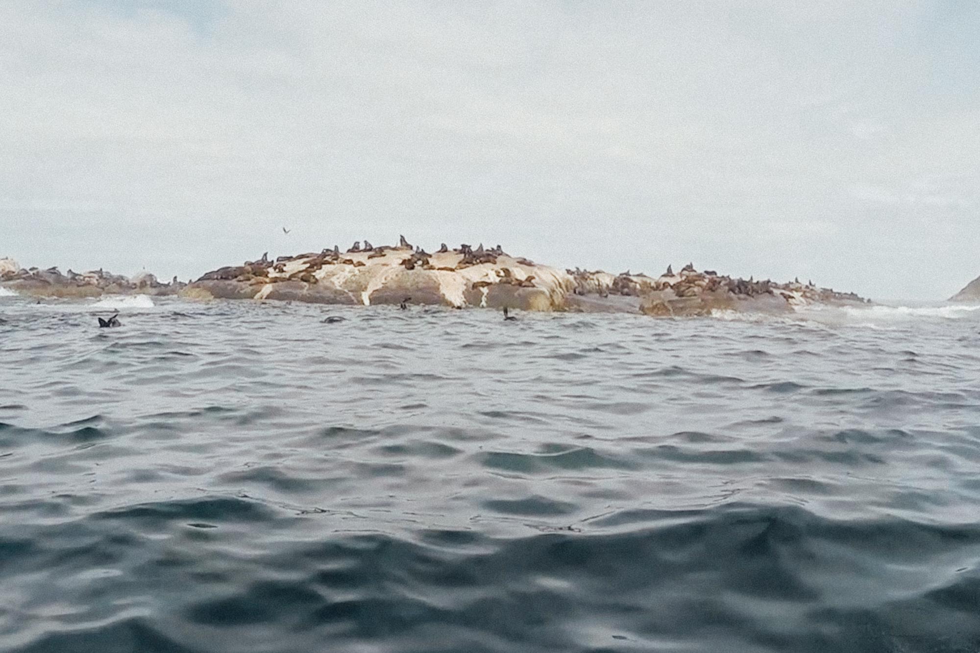 Capetown -59.jpg