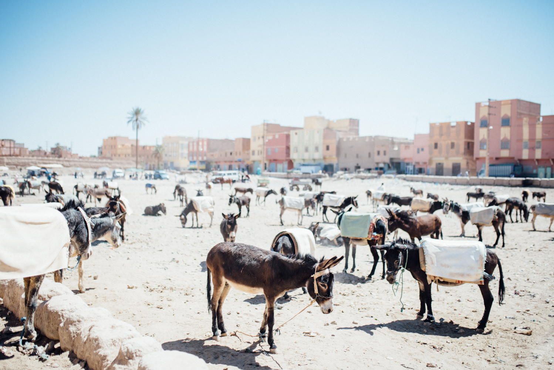 Sahara -32.jpg