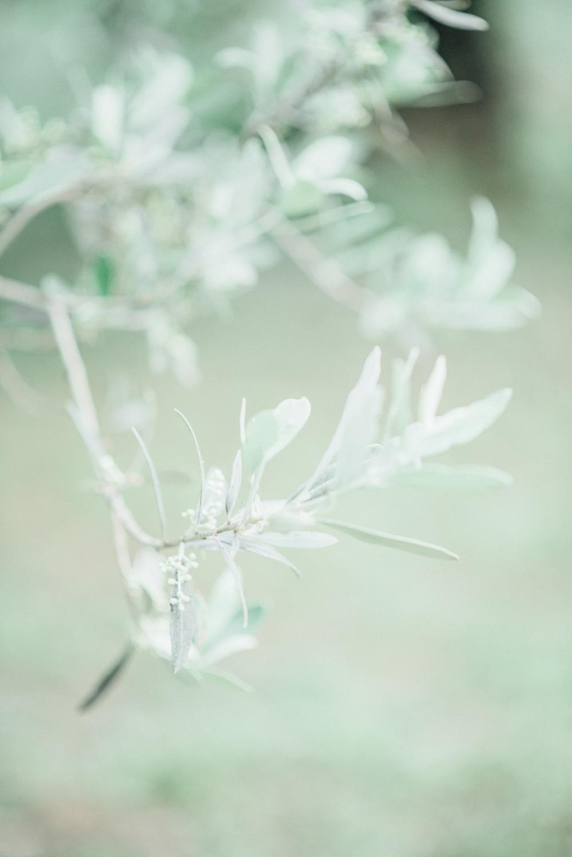 Eva Lin Photography 5.19.18 -101.jpg