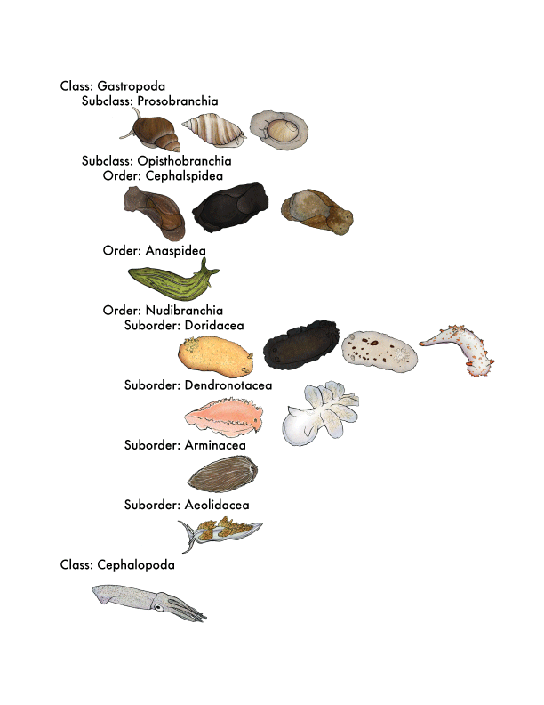Rock_Phylogeny_layout.png