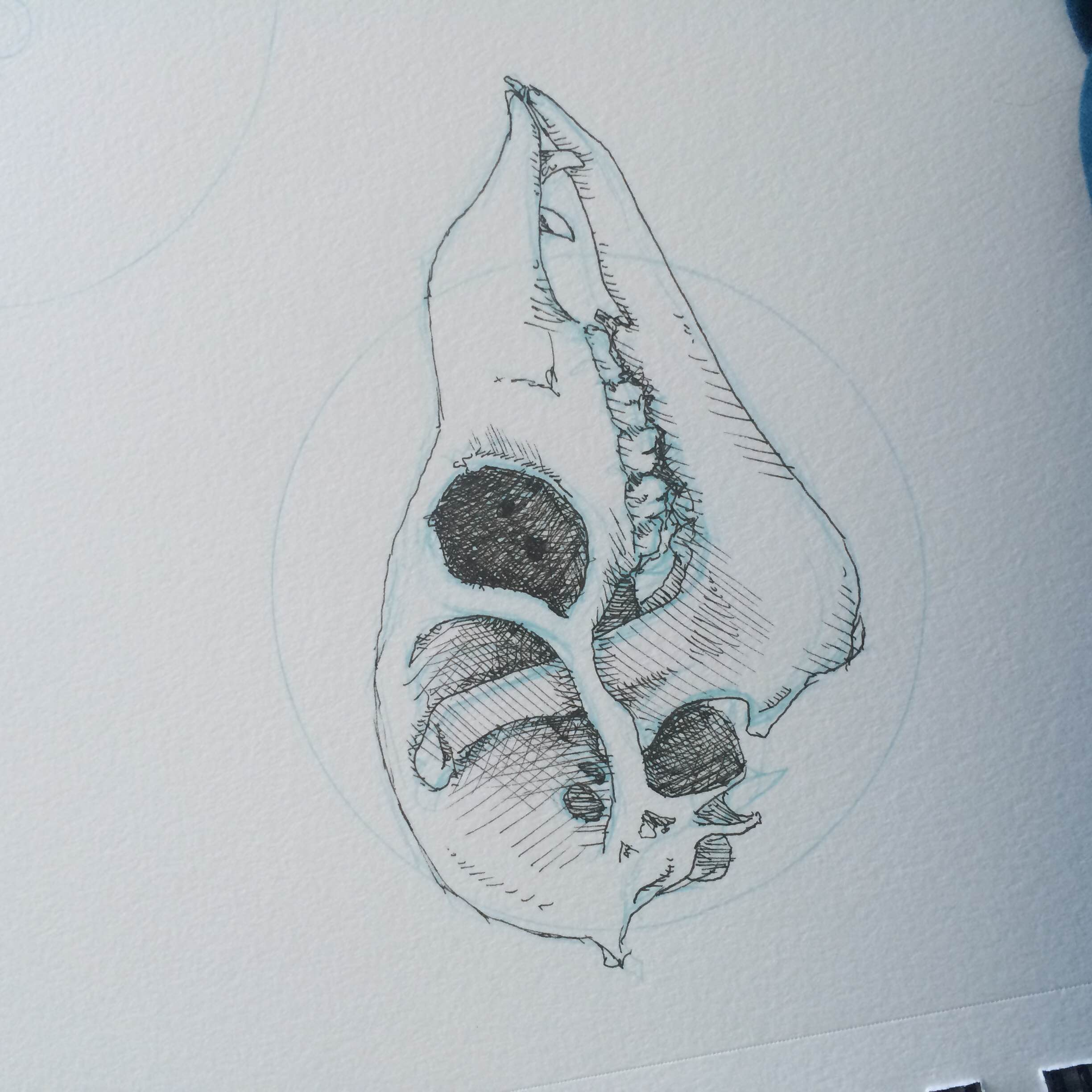 This is an alpaca skull I drew for a project I had–I was hoping to better understand what an alpaca's skull looks like under all that fluff they have.