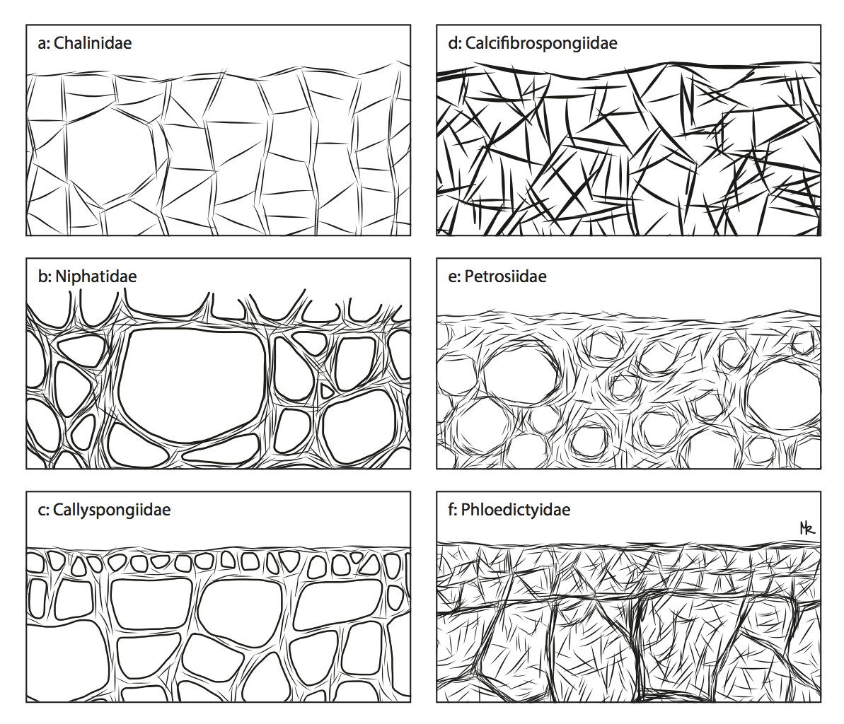 Structures of Sponges
