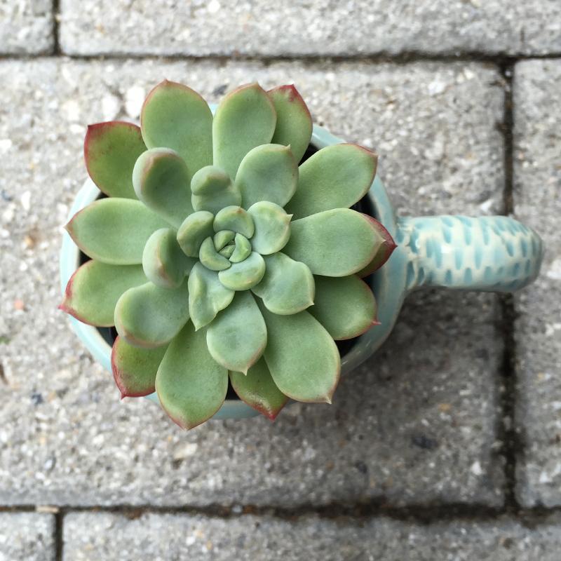 HandBuiltCup_Succulent_01.jpg