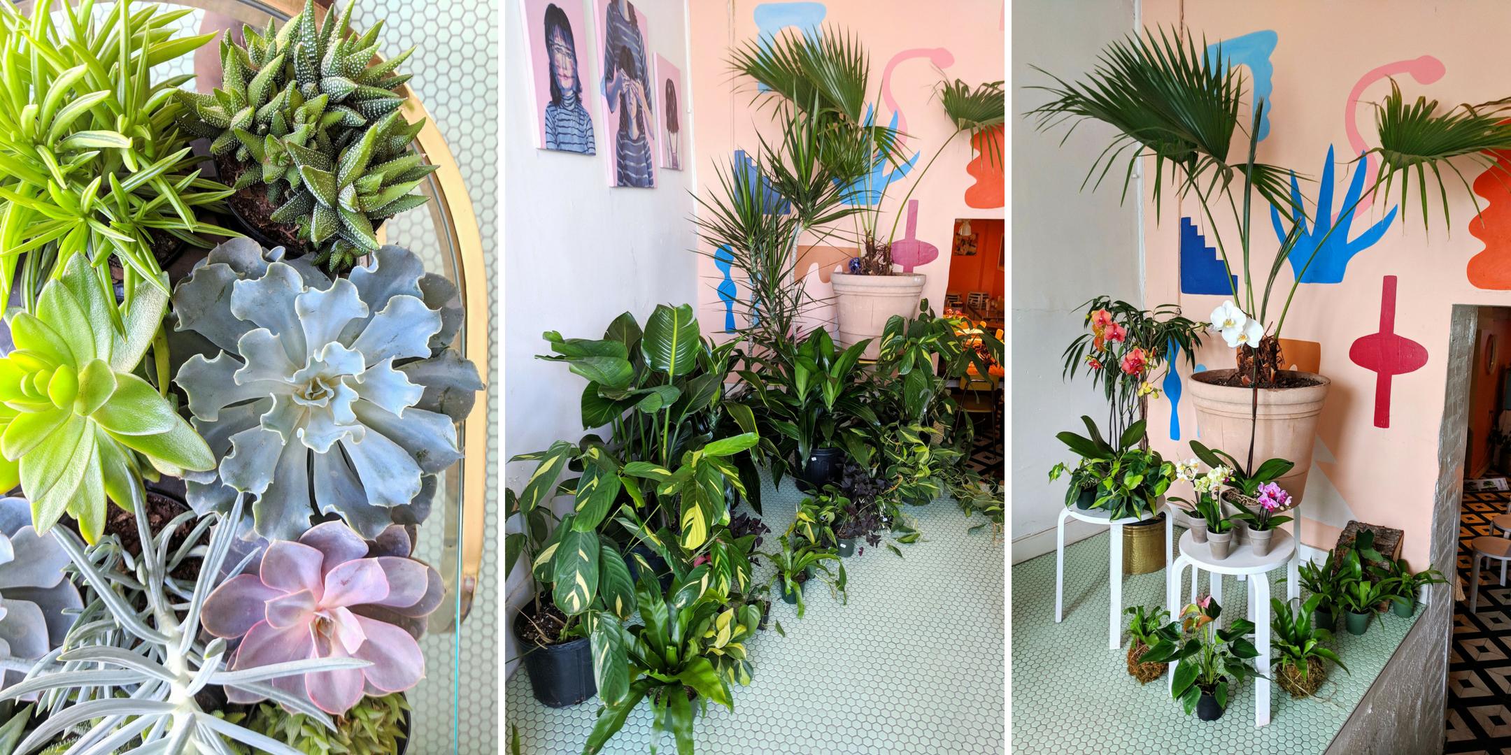 Plantswap Eventbrite - Rock Paper Plant.png