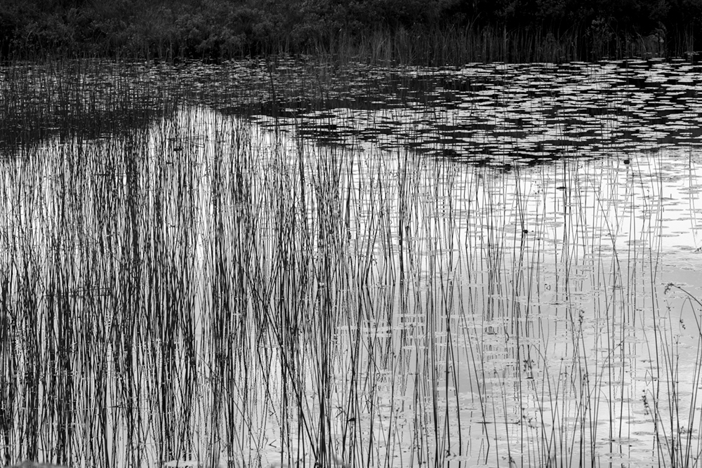 LochinverReeds_04of07.jpg