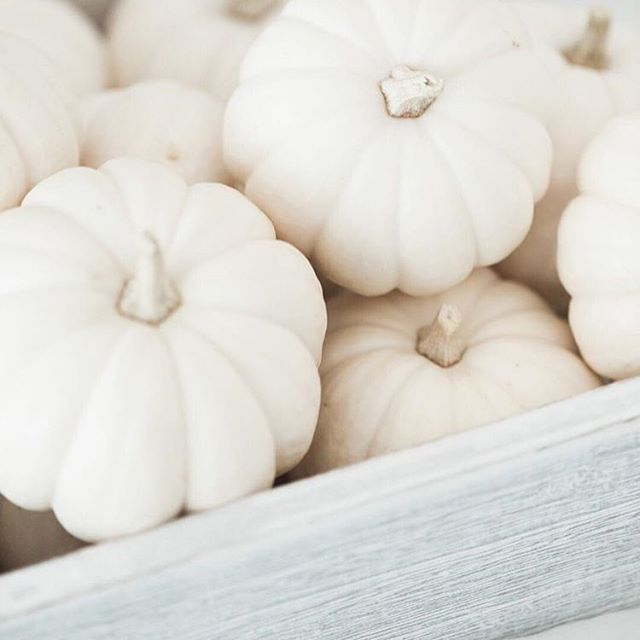 Mini white pumpkins...Yes, please! Happy Friday everyone and enjoy the beautiful weekend! xo #droletpaperie #falldecor #itsallinthedetails