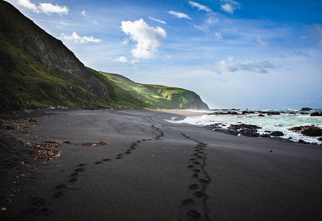 A Pair on Black Sand