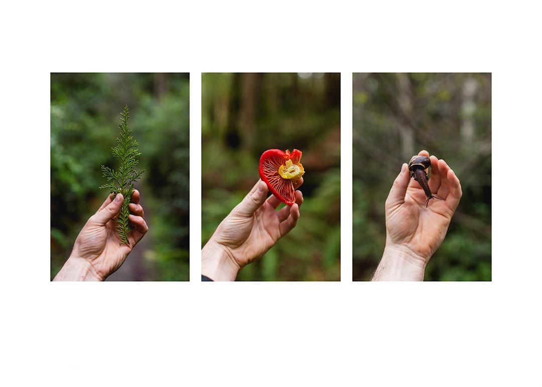 Object in Hand: Cedar, Half a Heart, The Snail