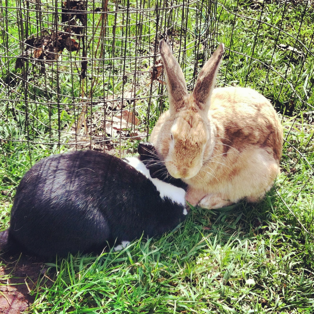 Buns: Ruby & Scotty