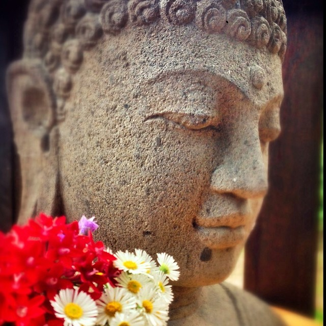 flowers bytes Maasa.