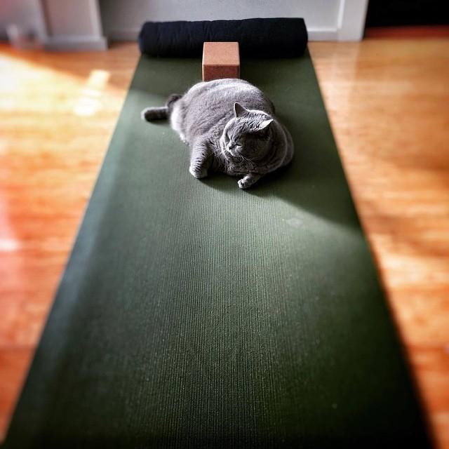 Sushi's morning practice on Jade mat @emp_industrial