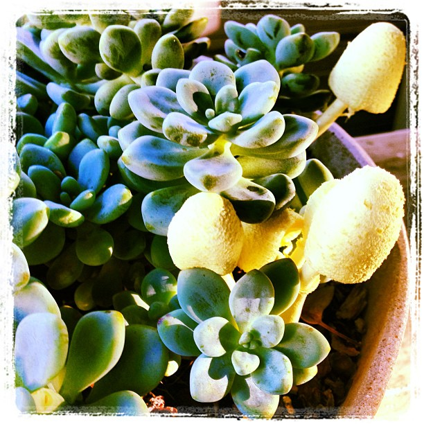Succulents and fungus cohabiting. Damp days.