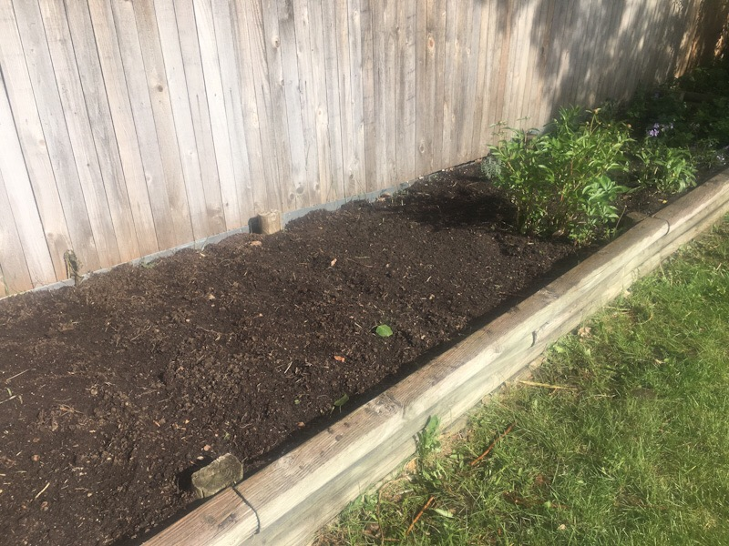 an attempt at a real live garden