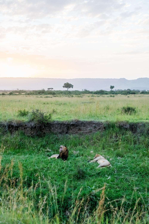 feb2018.africa-0941.jpg