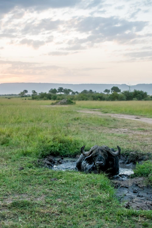 feb2018.africa-0952.jpg