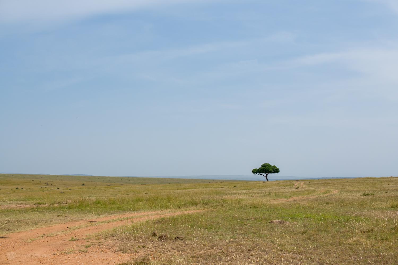 feb2018.africa-1195.jpg