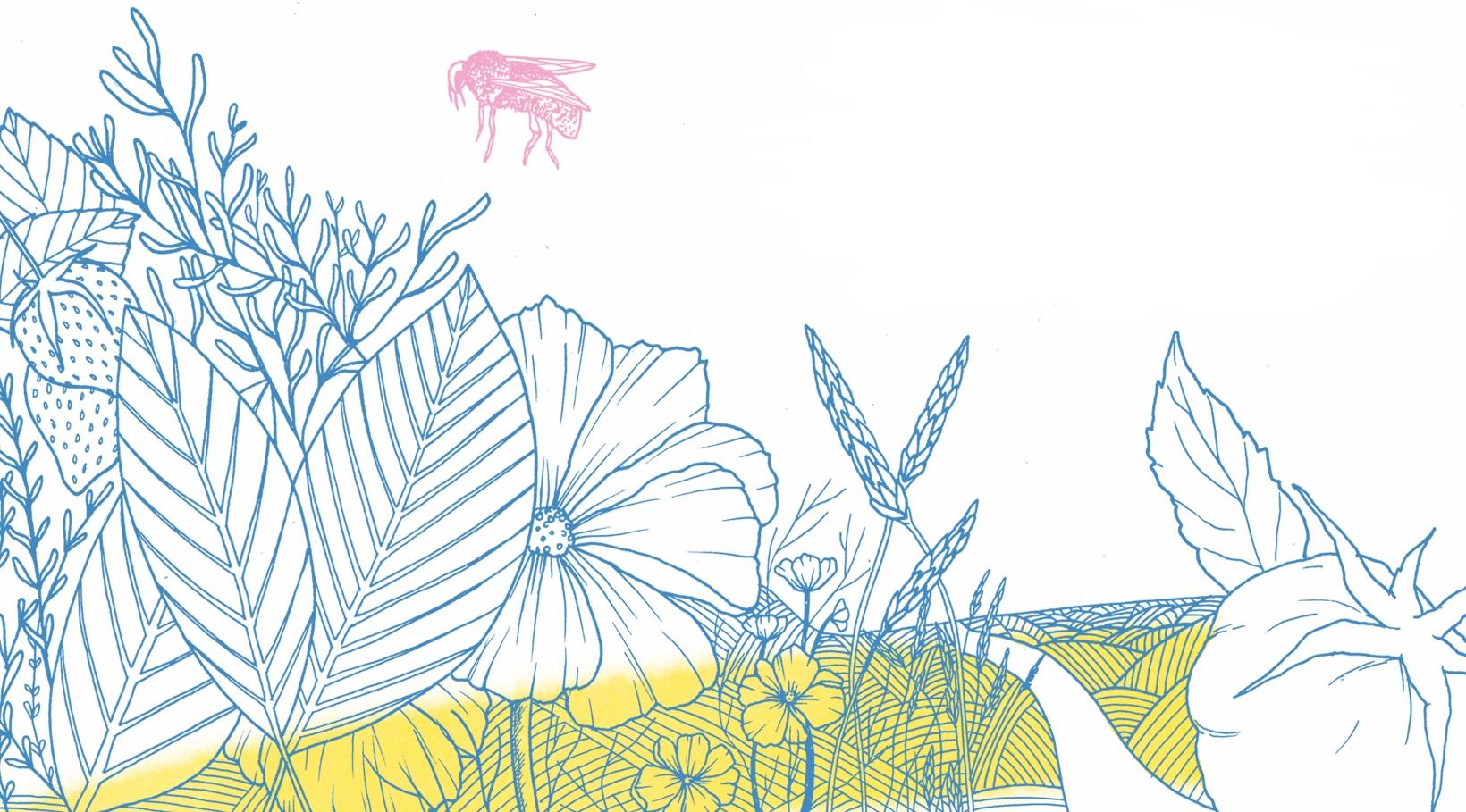 Illustration des Mercredis agro, une série d'ateliers et de films en plein air à thématiques agroalimentaires, conçus par Sara et présentée à l'été 2018 sur le Campus Mil de l'Université de Montréal, en collaboration avec la  Coop Bioma  et les partenaires du site.