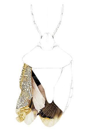 Illustration by Cornelia Hesse Honegger