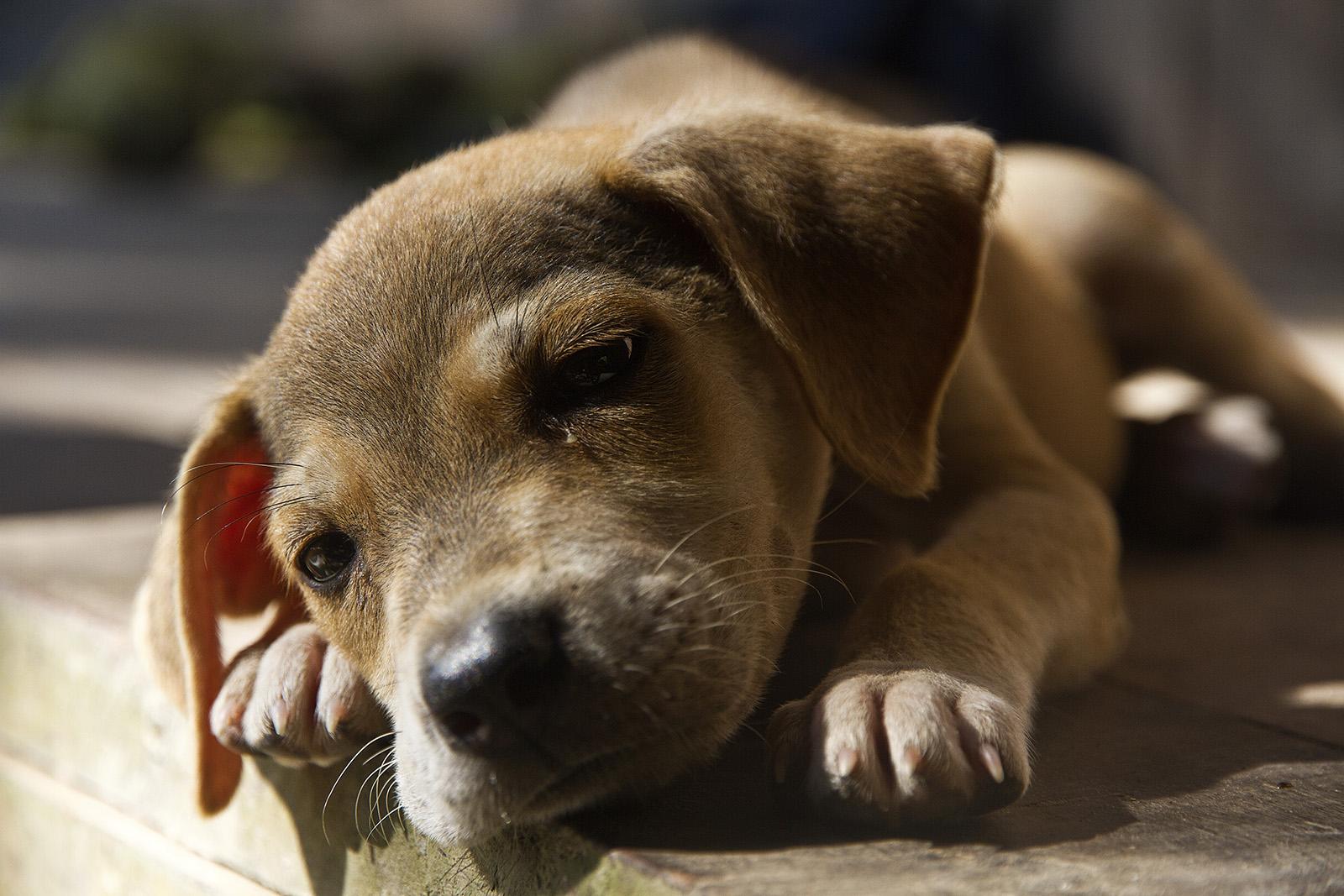 Cabo Lopez Dog.jpg