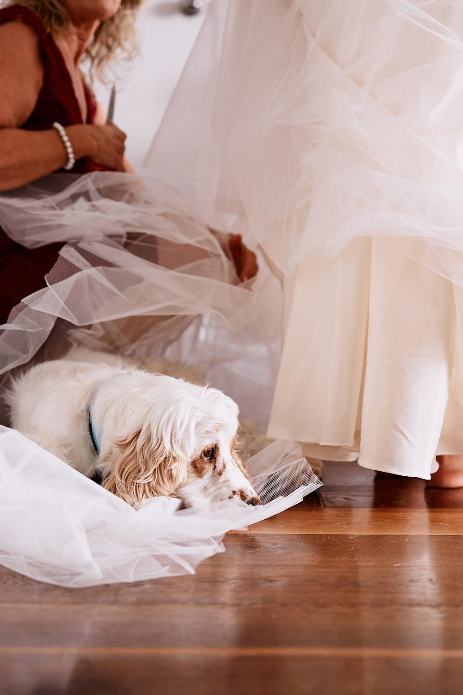 Brides pet dog laying on wedding dress