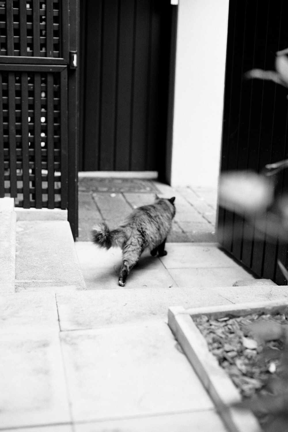 Black and white of cat exiting open gate