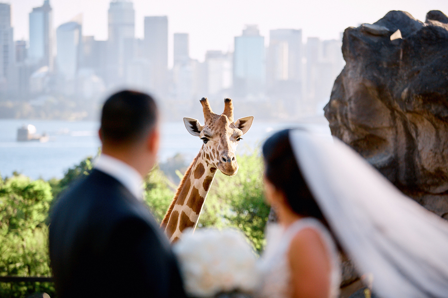 Bride groom and giraffe with a view of Sydney skyline from Taronga Zoo by Blue Mountains wedding photographer Joshua Witheford
