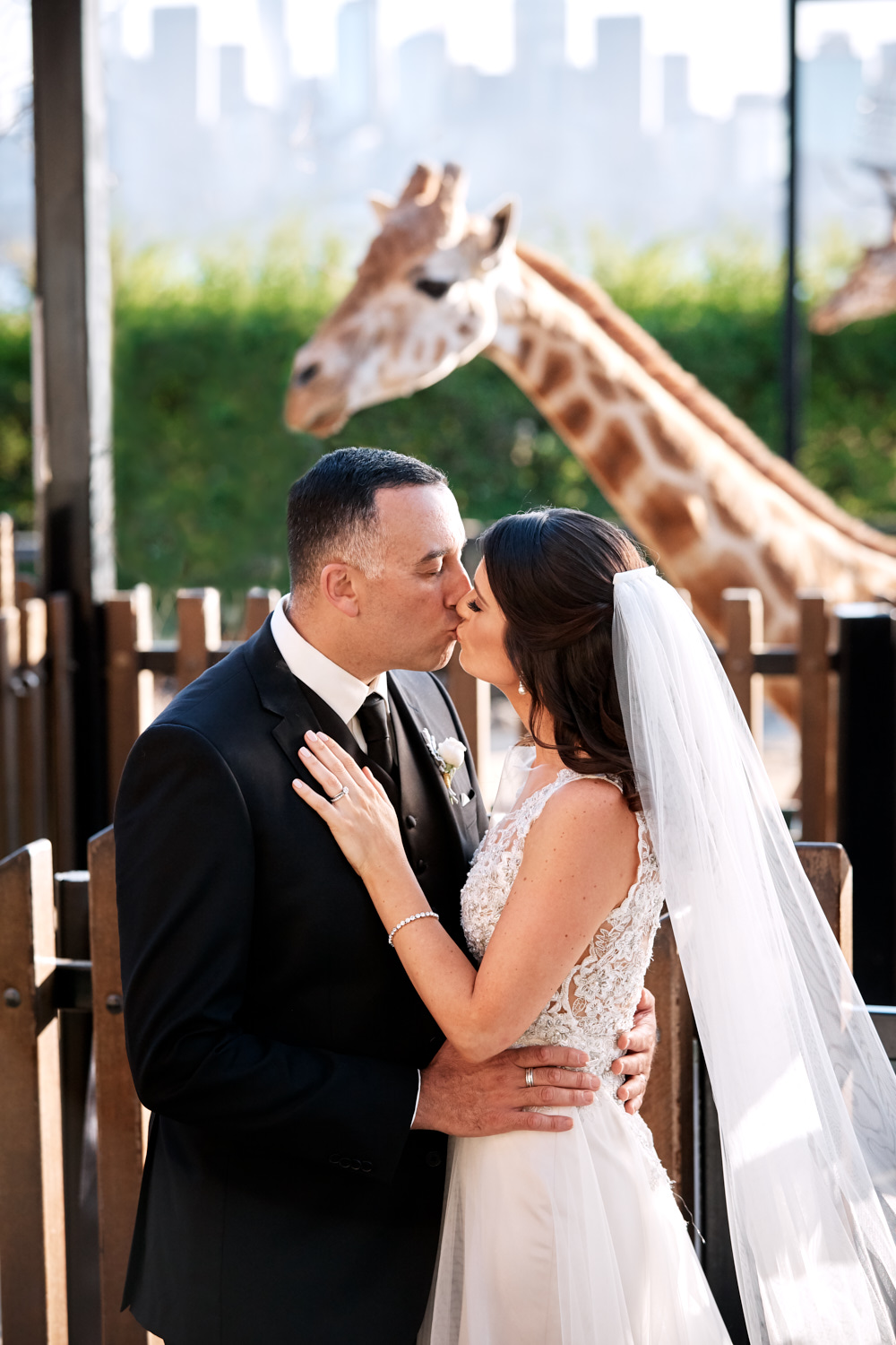 Bride and groom kissing in front of giraffe at Taronga Zoo by Blue Mountains wedding photographer Joshua Witheford