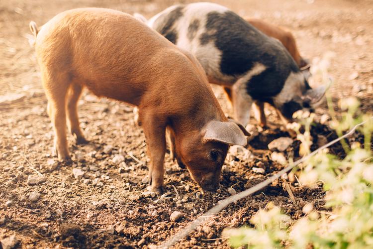 Ängavallen Farm by The Blonde Vagabond.jpg