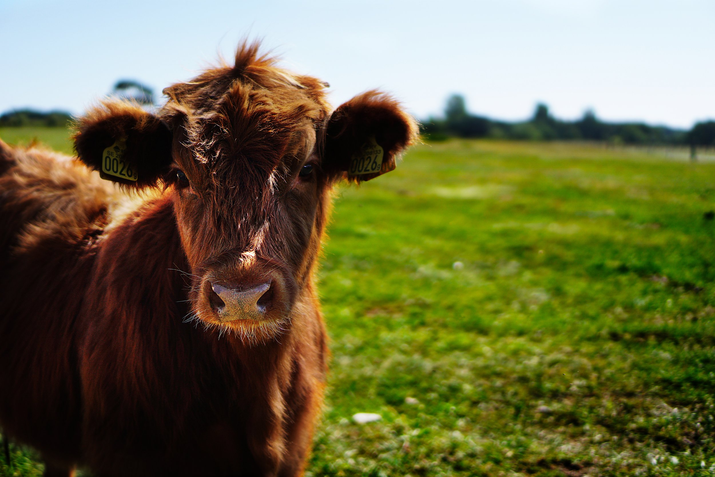 The more almonds we milk, the less we need to use cows for their milk!