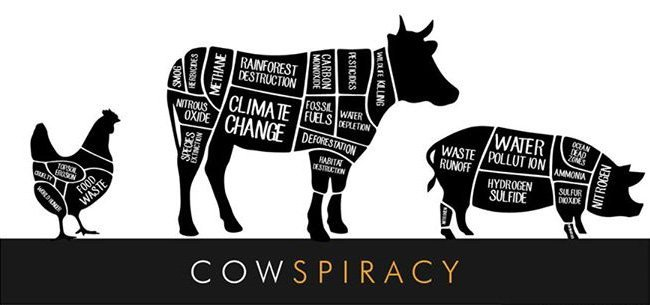 Cows piracy.jpg