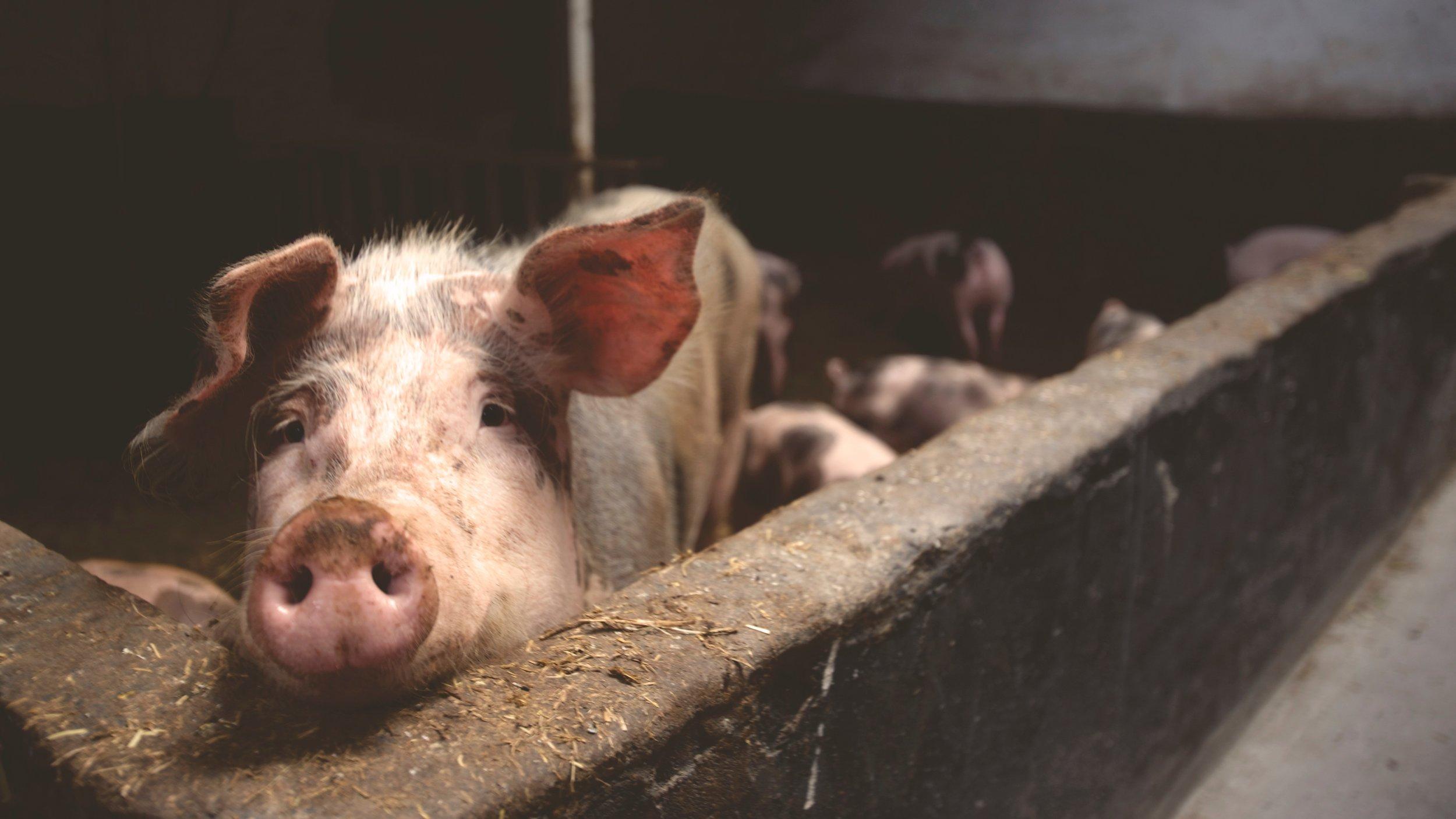 animal farming.jpg