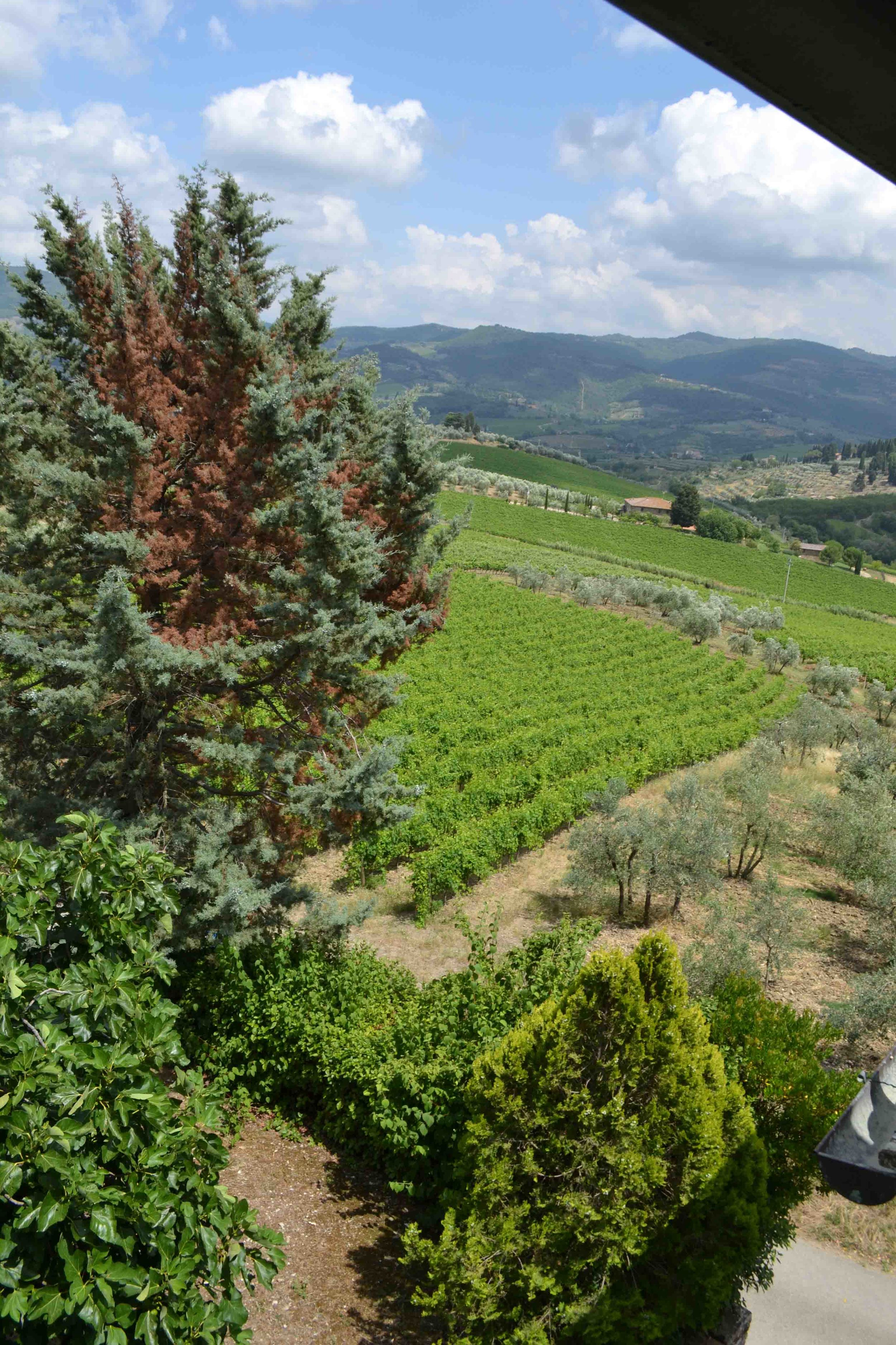 View from my window towards Greve in Chianti
