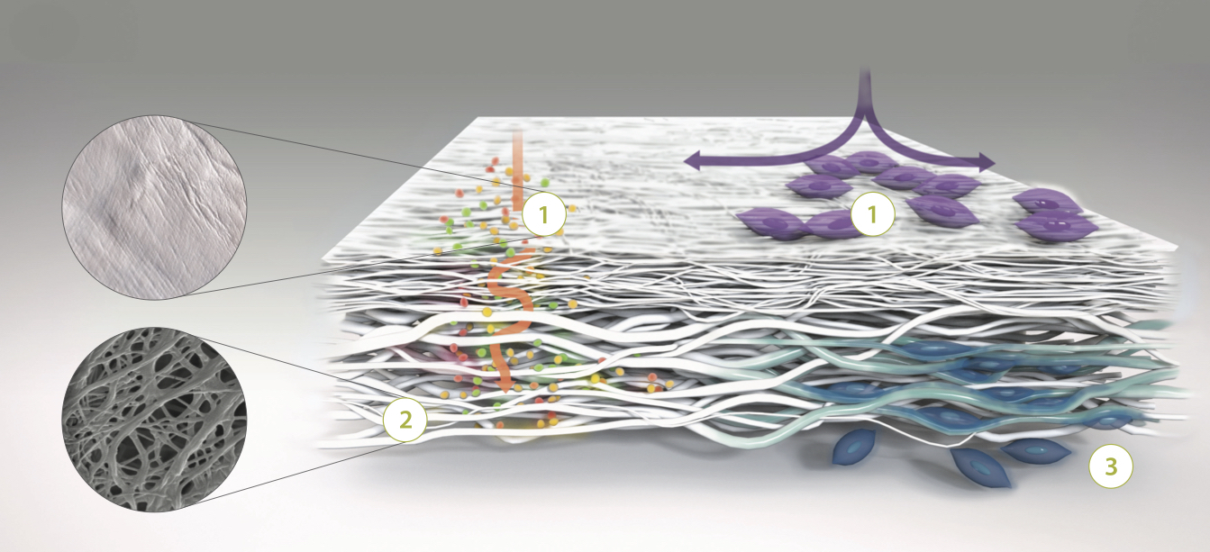 Orthocell Postcard membrane animation V2.jpg