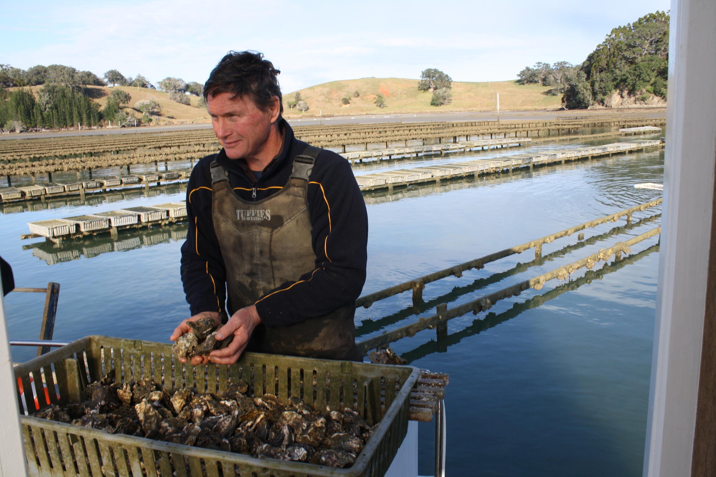 Andrew Hay, Mahurangi Oysters