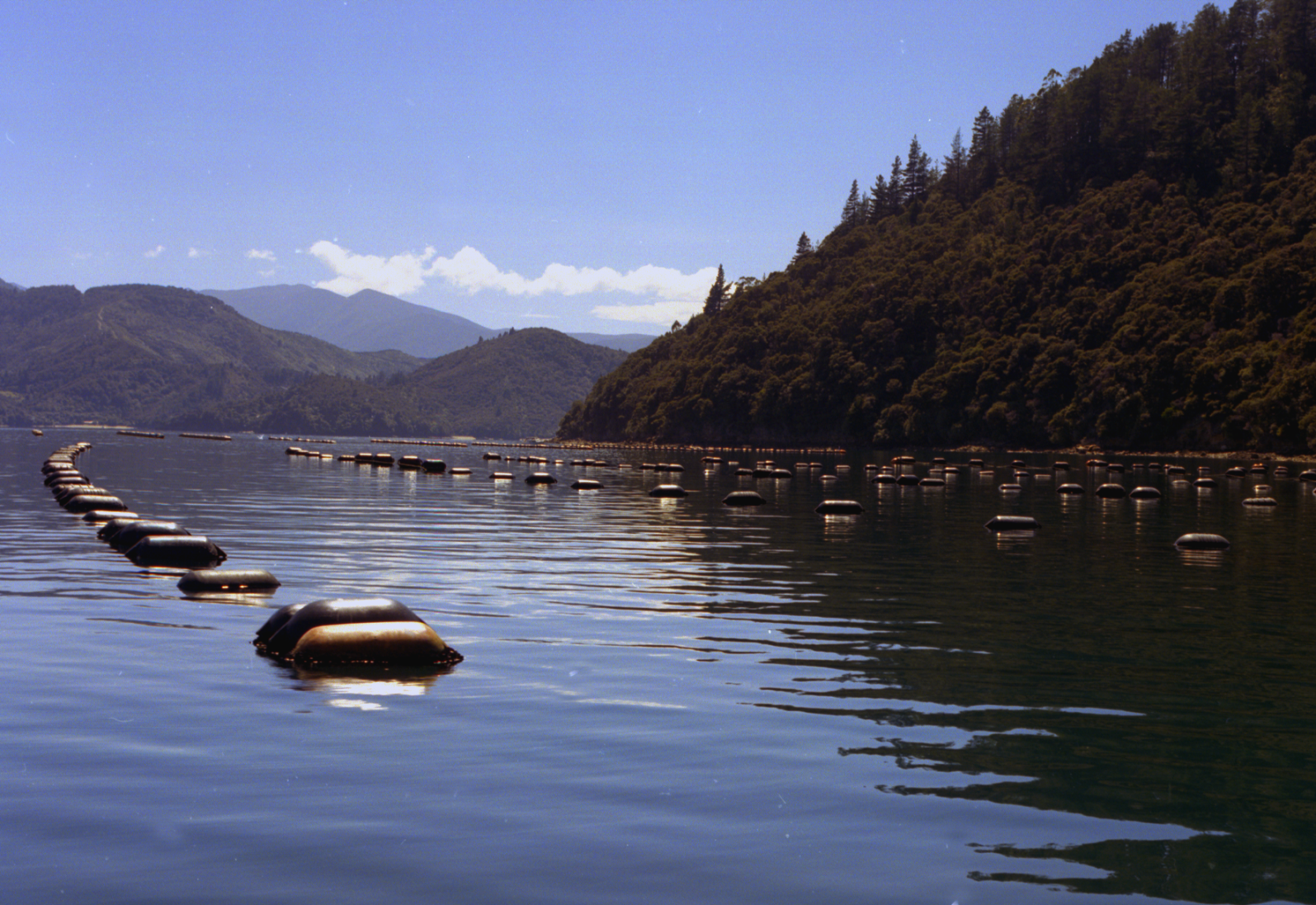 Mussel farm in the Marlborough Sounds